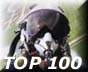 AVIATION TOP 100 - www.avitop.com
